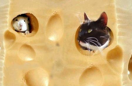 Хочу сыр!