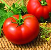 Помидоры сорта Нейрон на сайте www.agrosemena.com/seed/vegetable-seeds/tomat.html