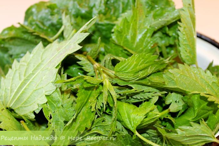 Молодые листочки и верхушки крапивы - основа для зеленого борща